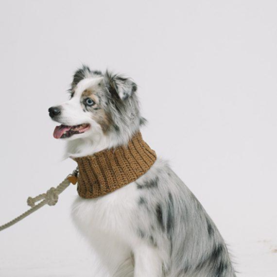 Bufanda para mascotas